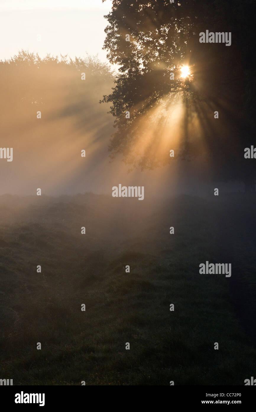 Autumn Morning Sunshine and Mist , Shining through Trees on Woodland Edge, Sjaelland, Denmark - Stock Image