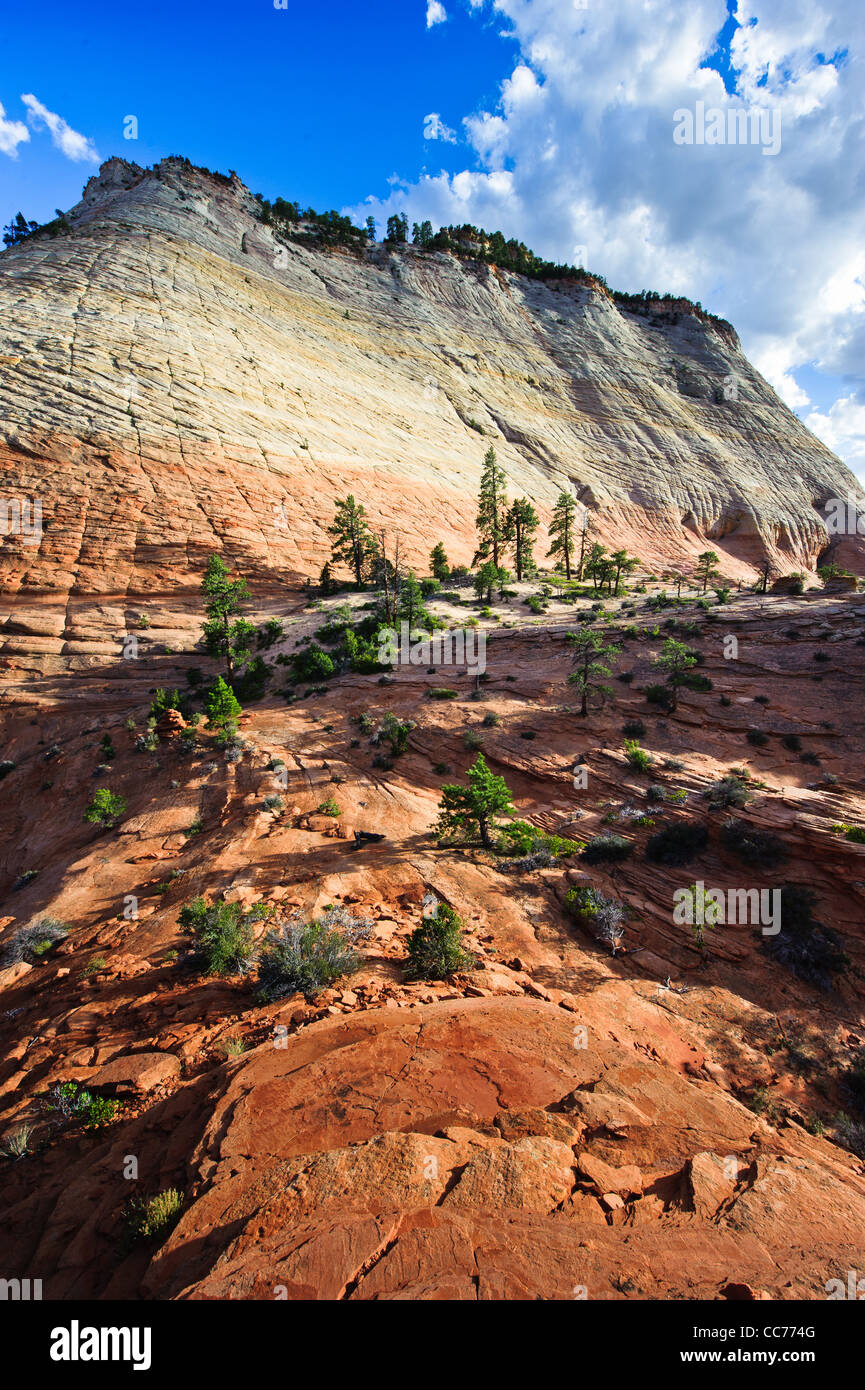 Checkerboard mesa sandstone cliff in Zion national park, USA - Stock Image