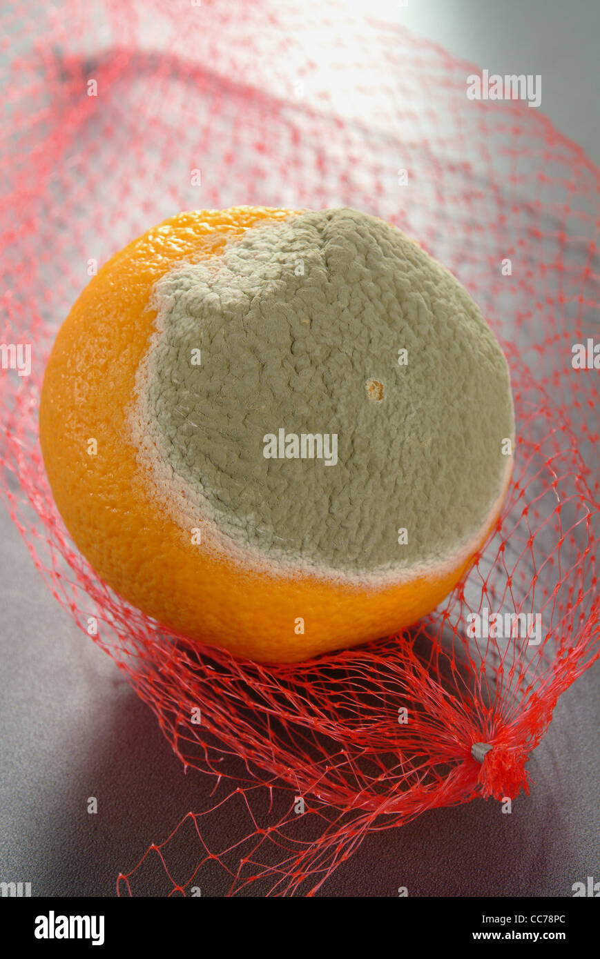 Orange, spoiled with mold on produce bag - Stock Image