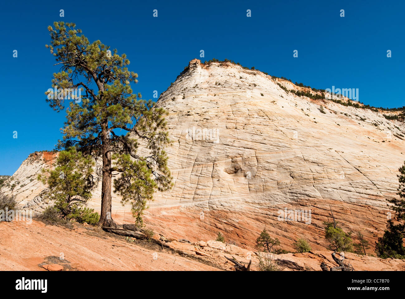 checkerboard mesa. scenic view of sandstone cliffs in zion national park, utah, usa - Stock Image