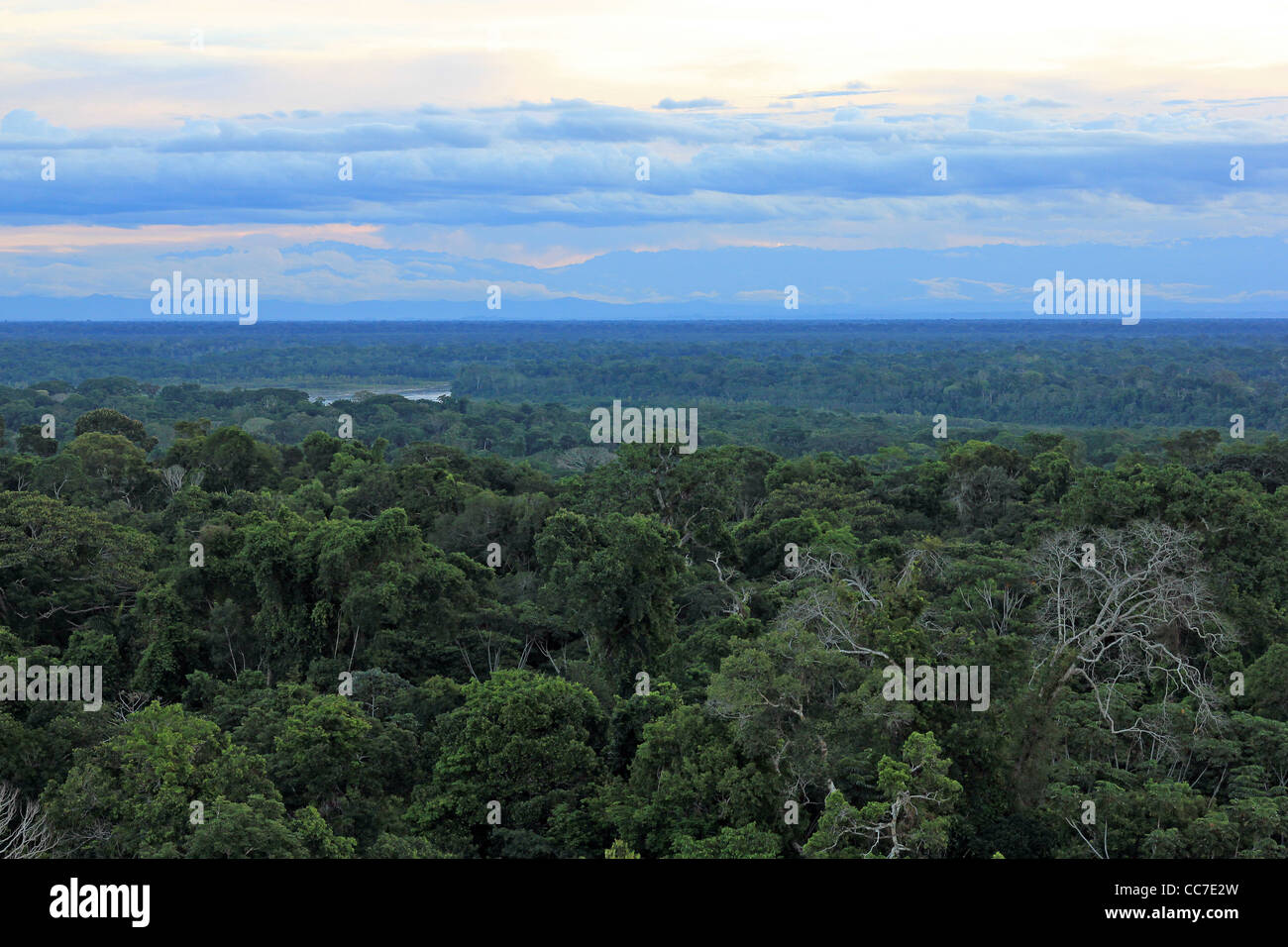 Primary Rain Forest viewed from the air with the Madre de Dios and Andes Mountains in background (Peru) - Stock Image