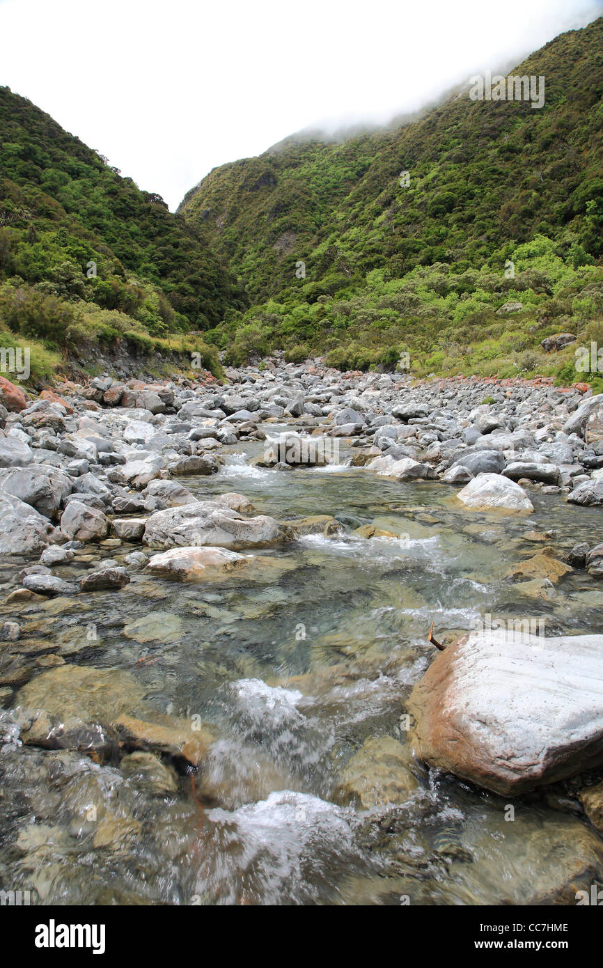 Nothofagus Beach Forest and a river bed at Arthurs Pass New Zealand Stock Photo