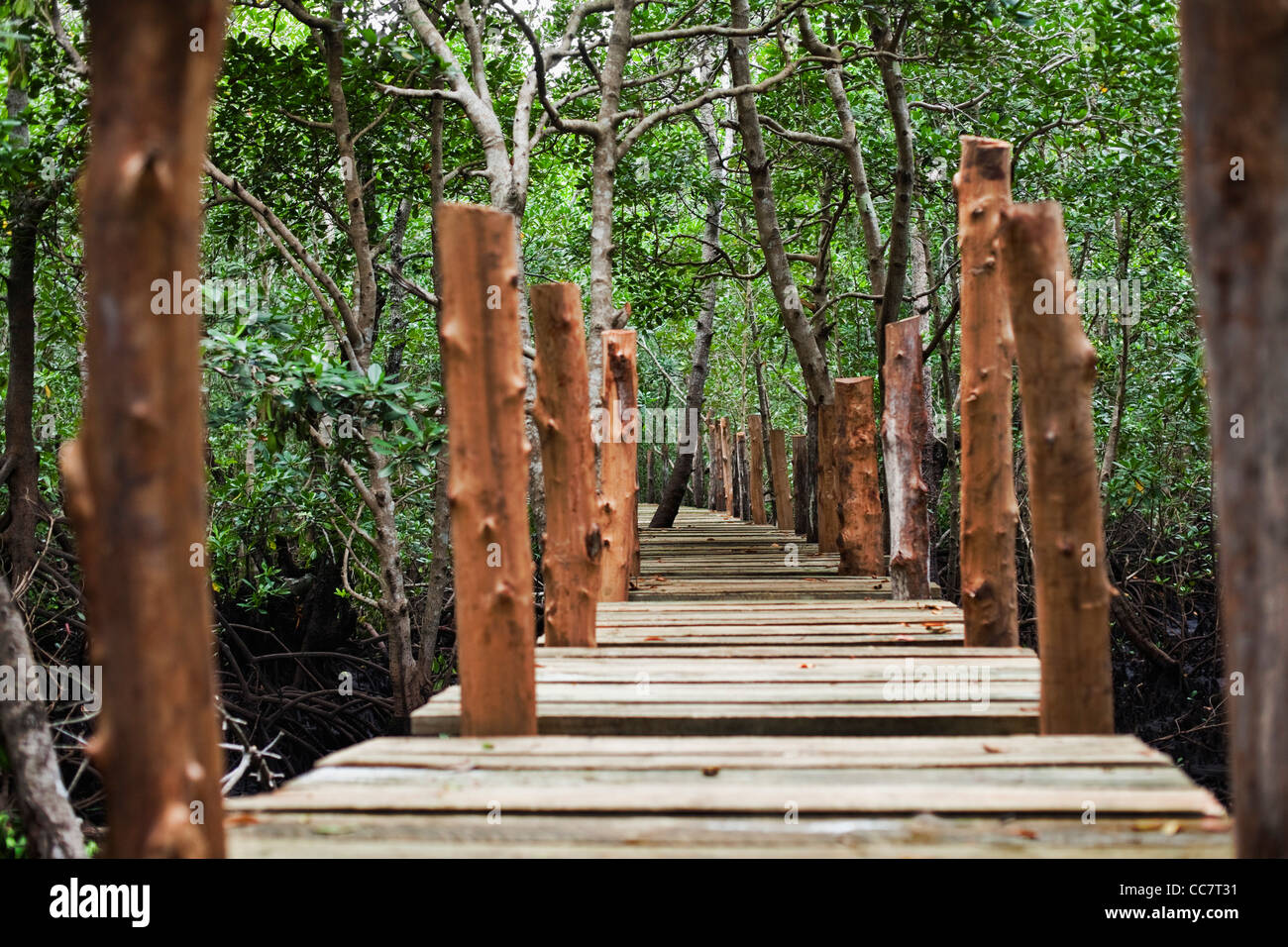 Forest Walk, Mangrove Swamp, Zanzibar, Tanzania Stock Photo
