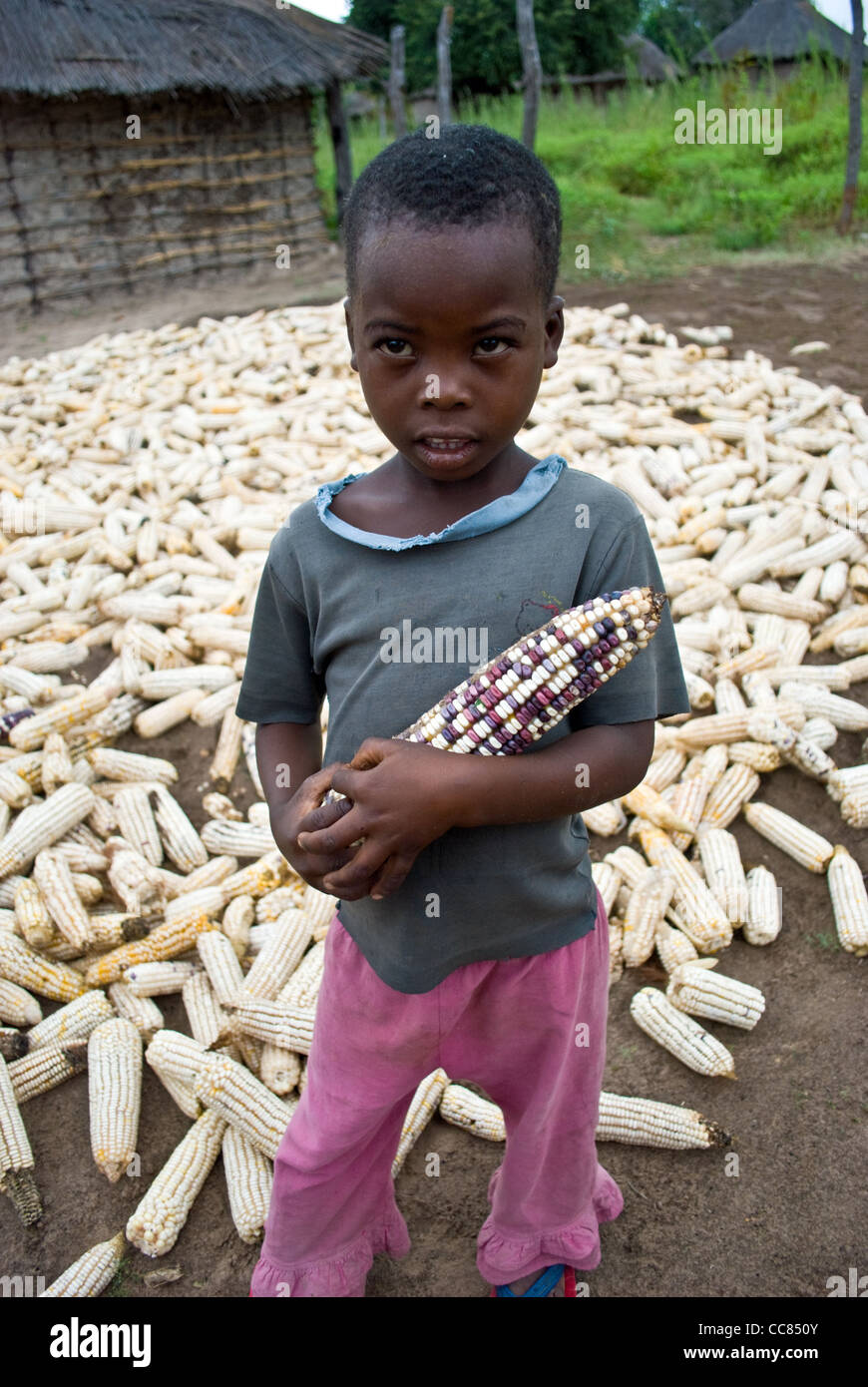 A Zambian boy clutches a 'mealie' maize. Maize is a diet staple in Zambia. - Stock Image