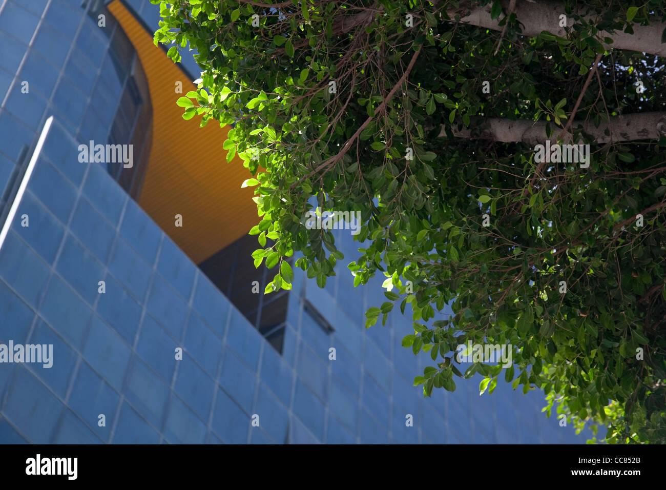 Sunlit leaves of a tree outlined against a modern blue building on Rothschild Boulevard Tel Aviv Israel - Stock Image