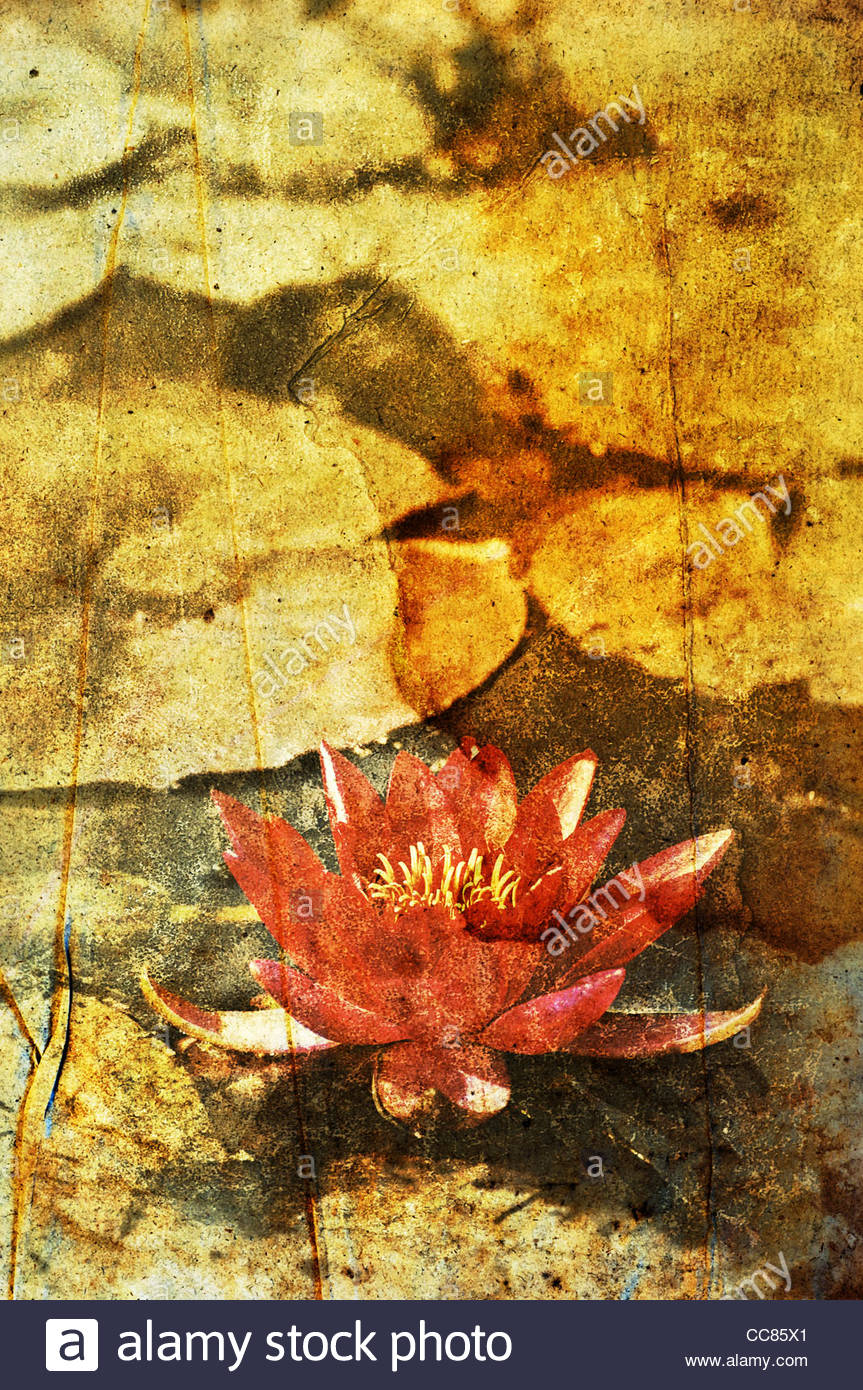 faded water lily - Stock Image