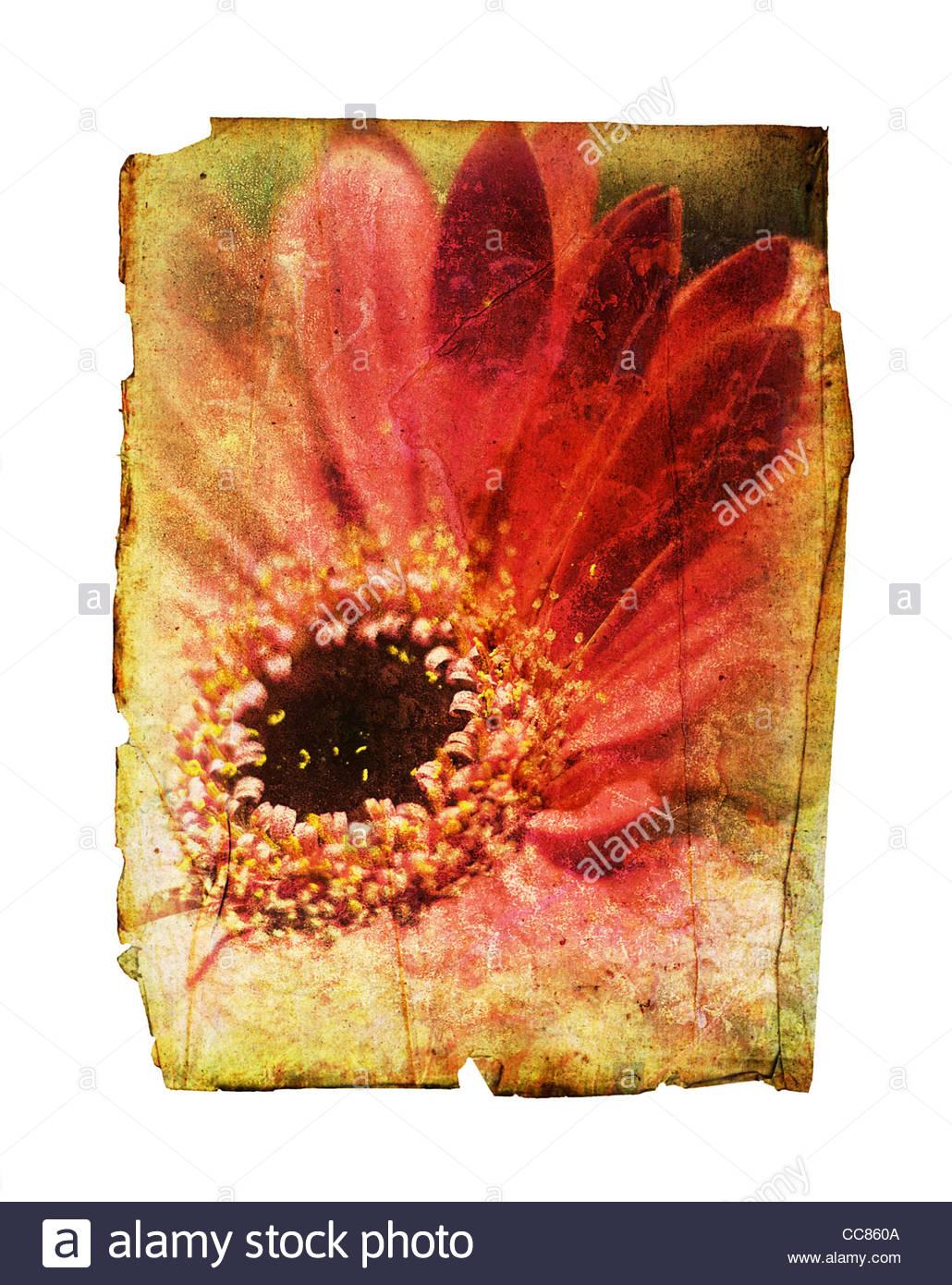 vintage flower paper - Stock Image