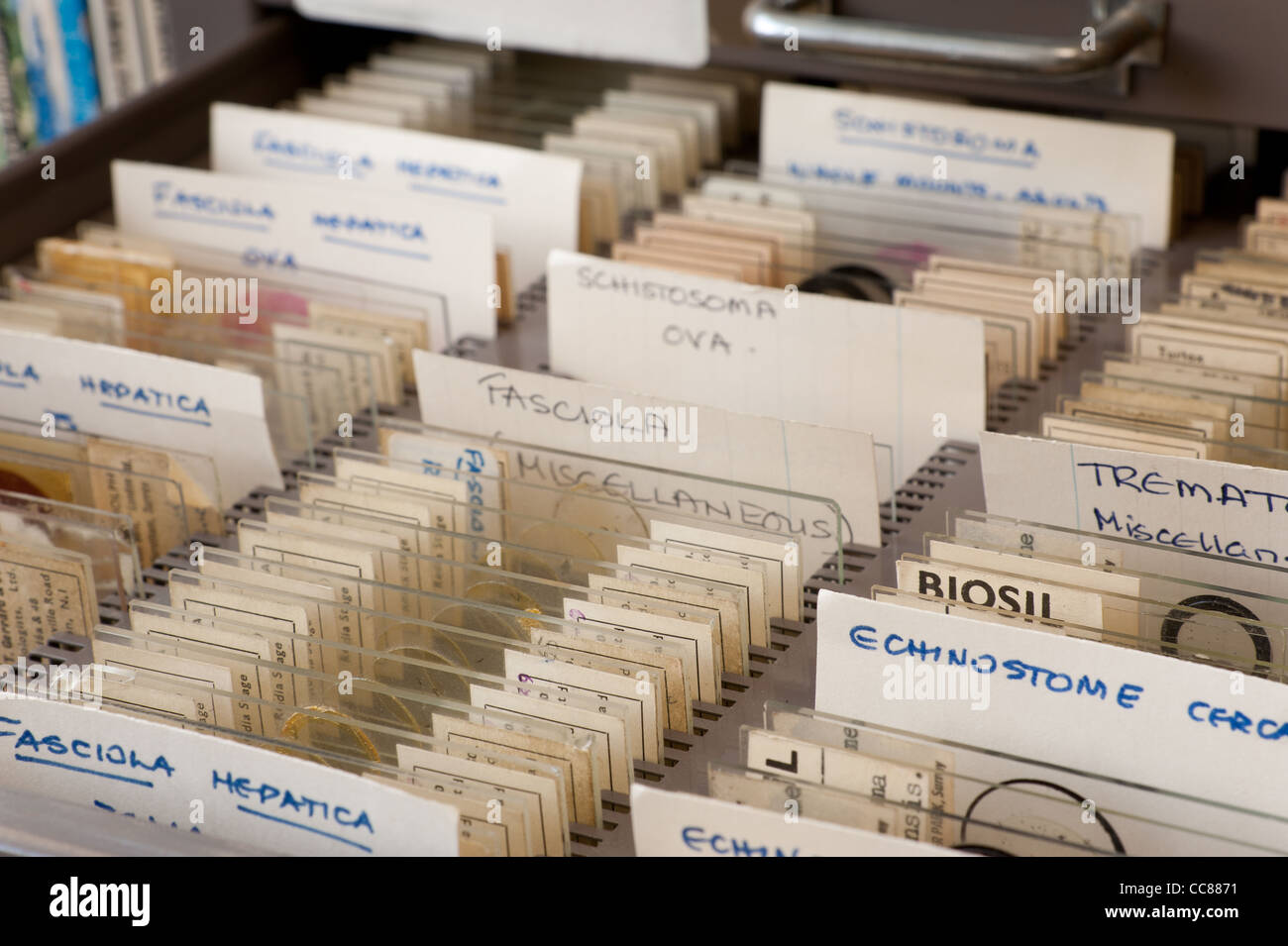 Rows of glass microscope slides of parasites in tray organized for ...