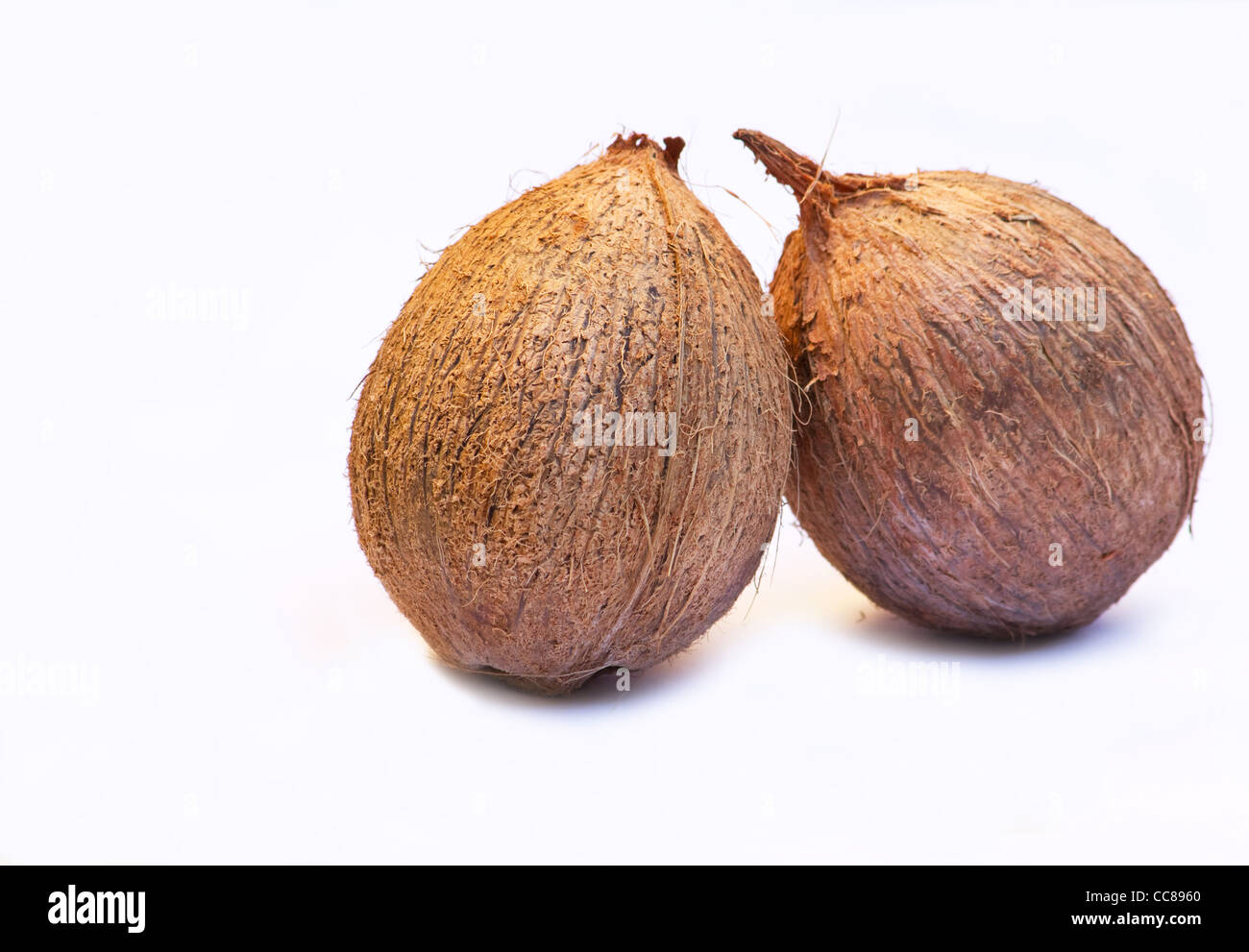 Close-up of two coconuts on white background - Stock Image