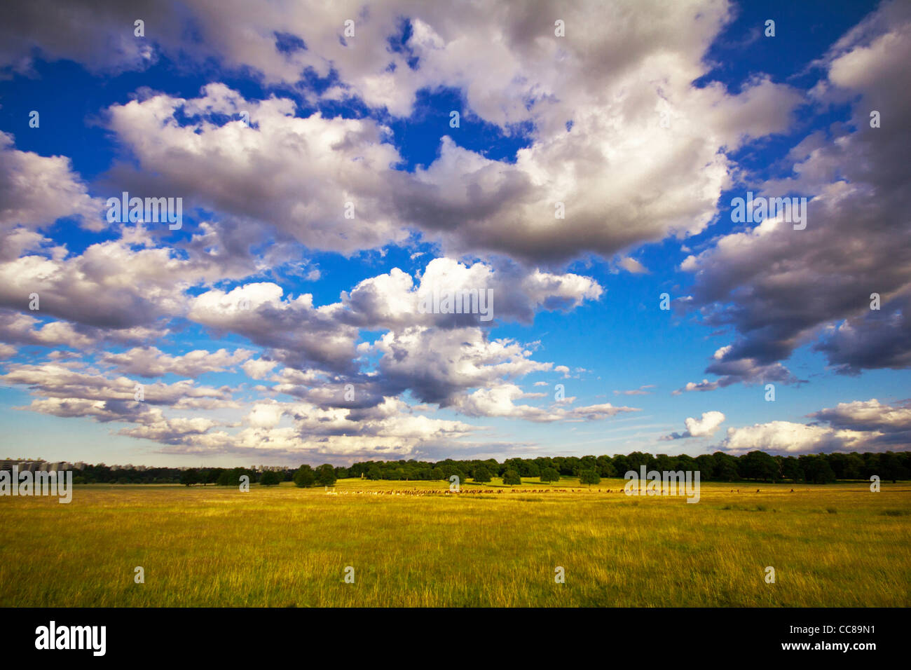 A sunny day in Richmond park - Stock Image