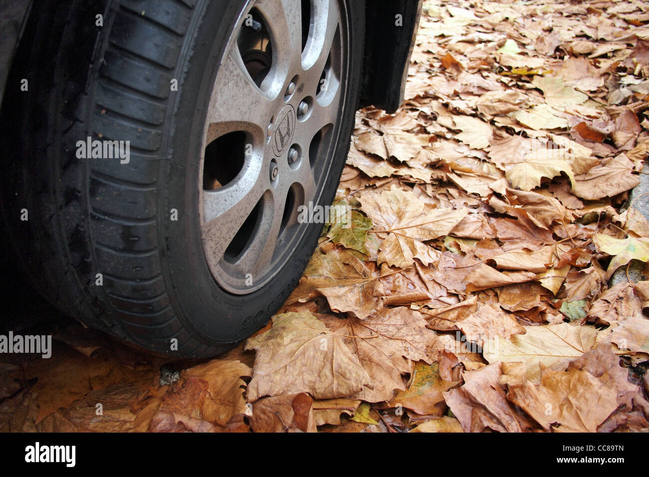 dead brown leaves on road street in London uk in autumn great britain england - Stock Image