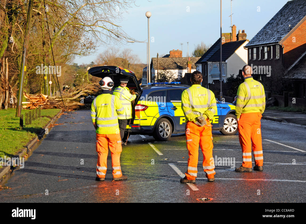 Workman awaiting electricity disconnection after tree blown over during winter storm damaged cables and closed road Stock Photo