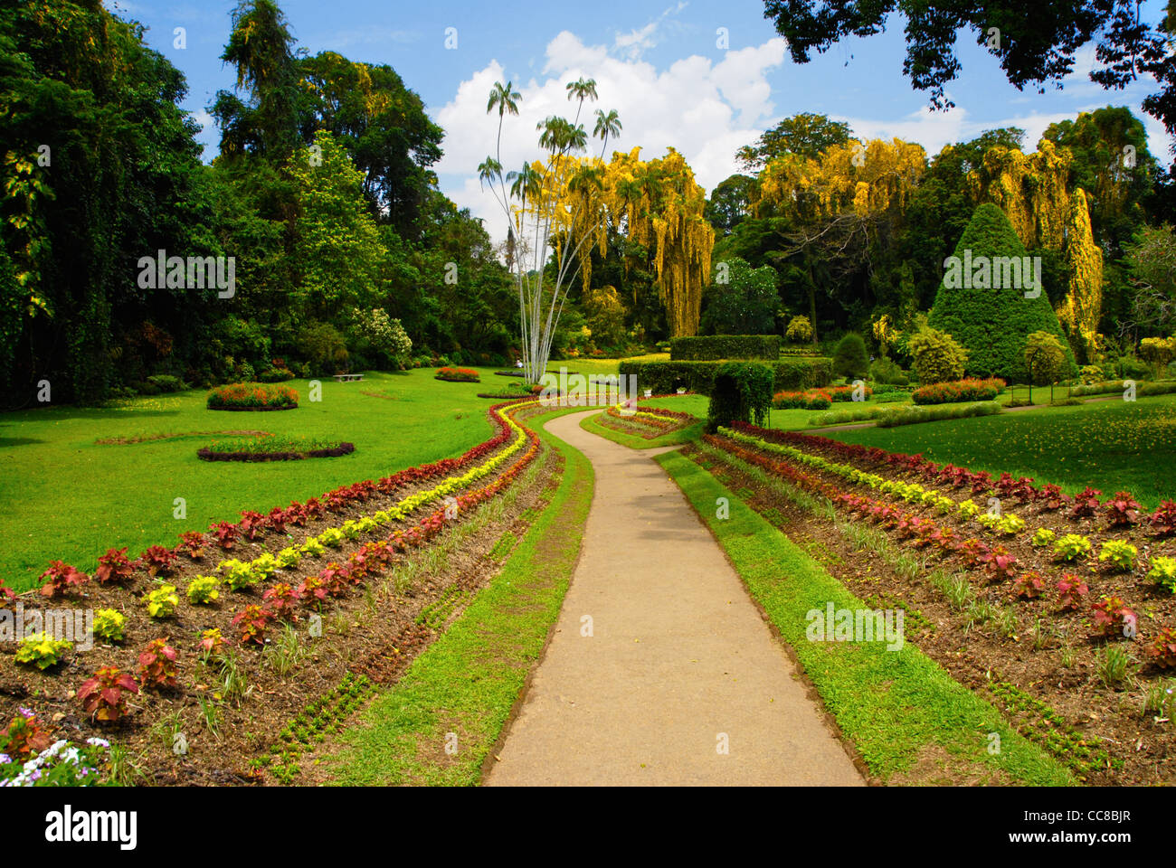 Royal Peradeniya Botanical Gardens Near Kandy, Sri Lanka. The Park Is  Especially Beautiful In March During The Blossom Of Ehala