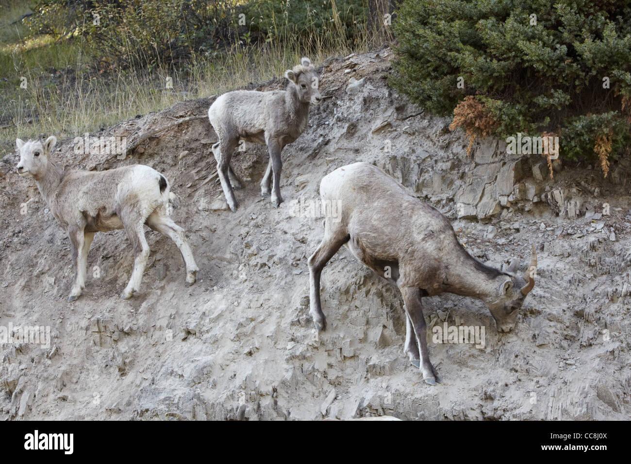 Parks big deer lick images 132