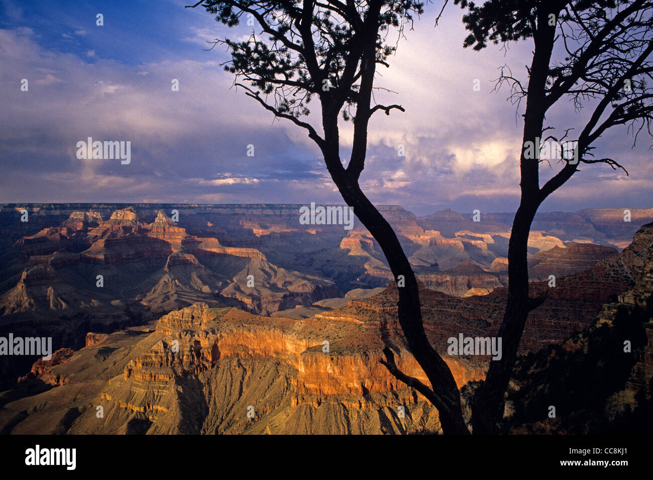 South Rim Grand Canyon taken near Yavapai Point sunset light on rock formations evening light with silhouetted tree Stock Photo