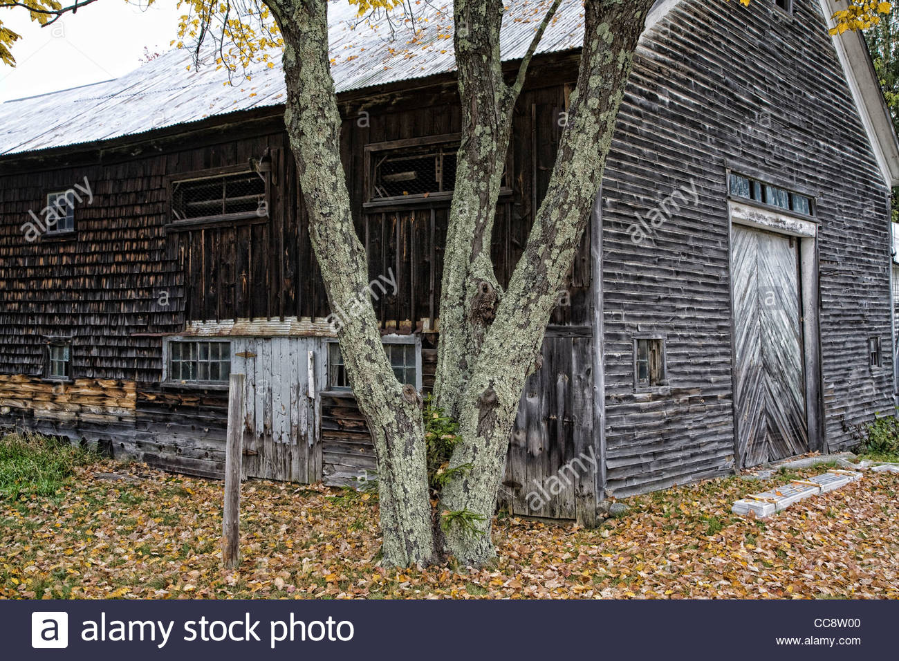 An old wood shake barn in rural Maine, USA. - Stock Image