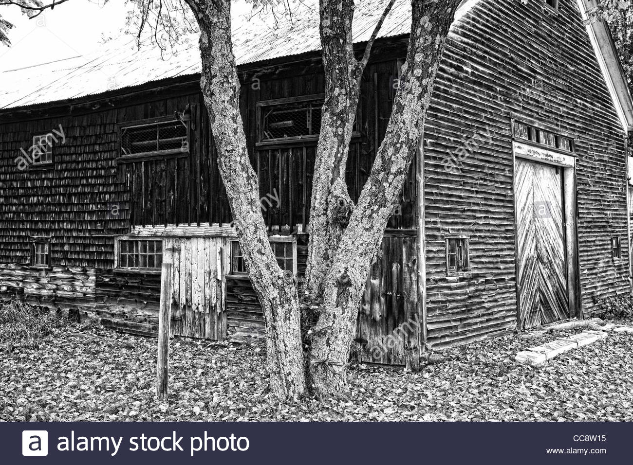 An old shake wold barn in Maine, USA - Stock Image