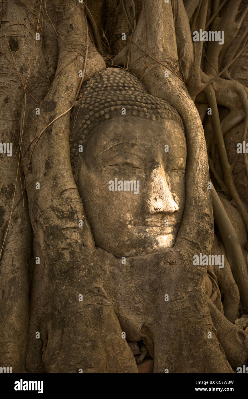 Head of a sandstone Buddha in the roots of bodhi tree, Wat Phra Mahathat, Ayutthaya, Thailand Stock Photo