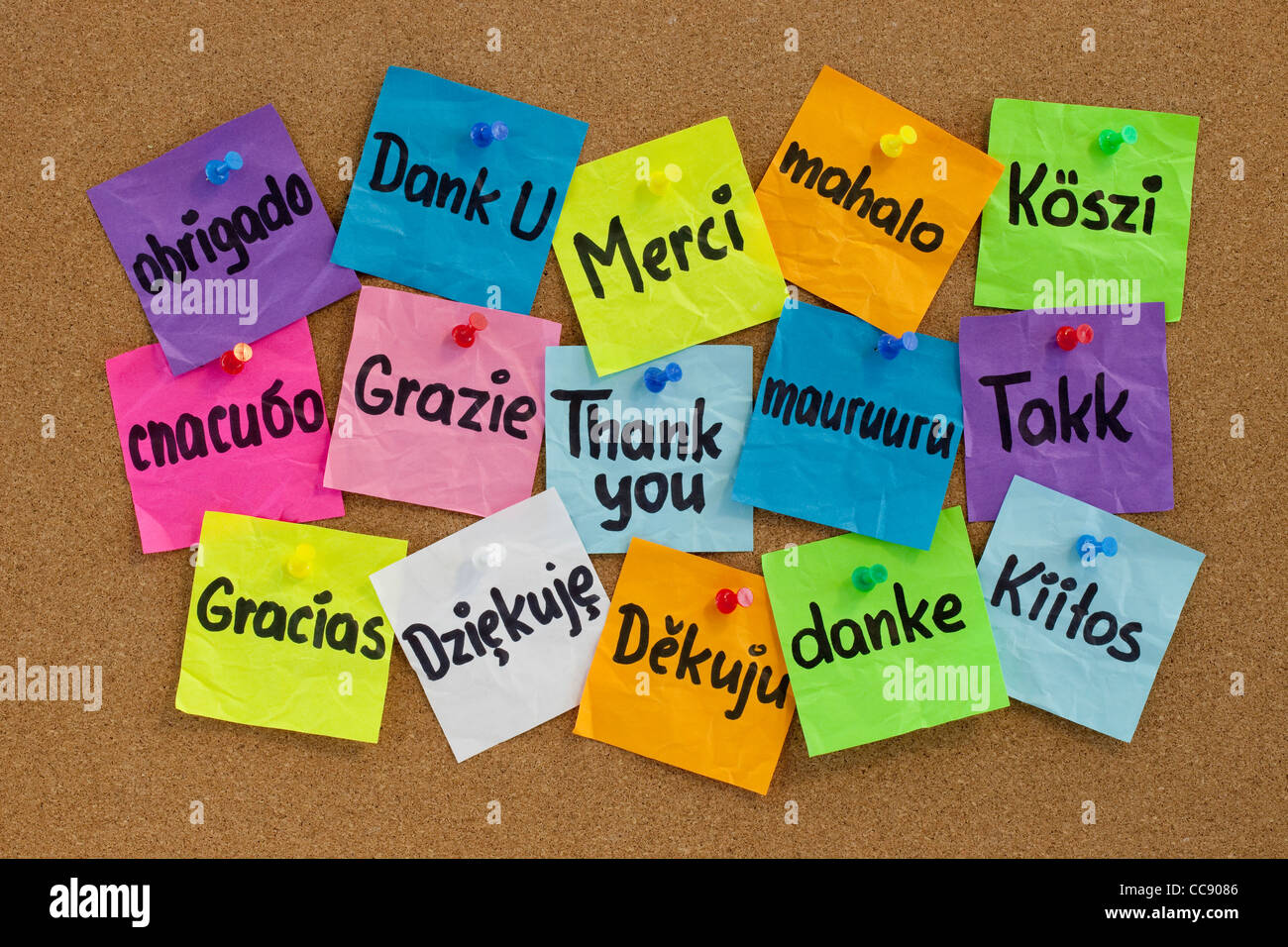 Thank you in sixteen languages - colorful sticky notes with handwriting on cork bulletin board - Stock Image