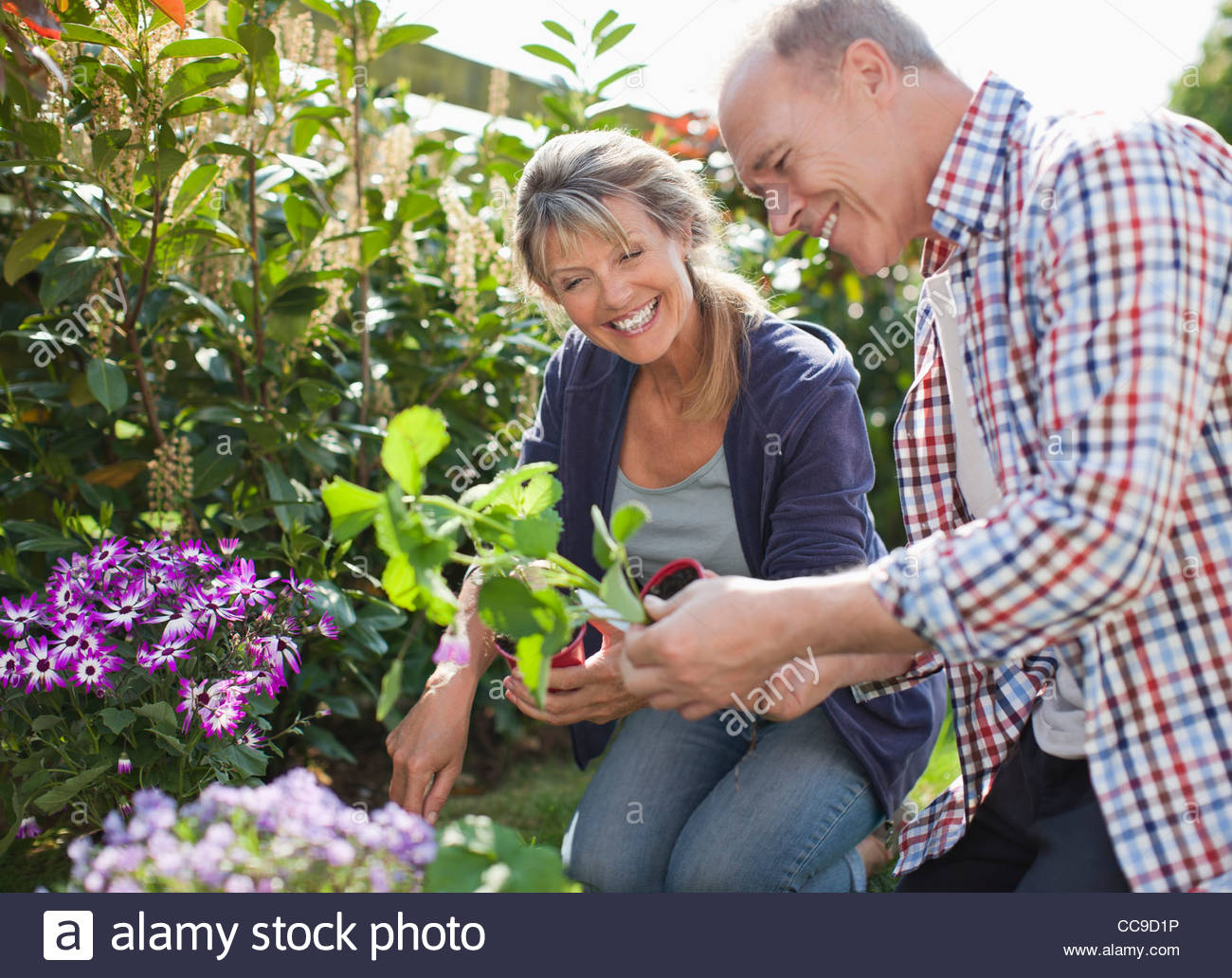 Senior couple planting in garden - Stock Image