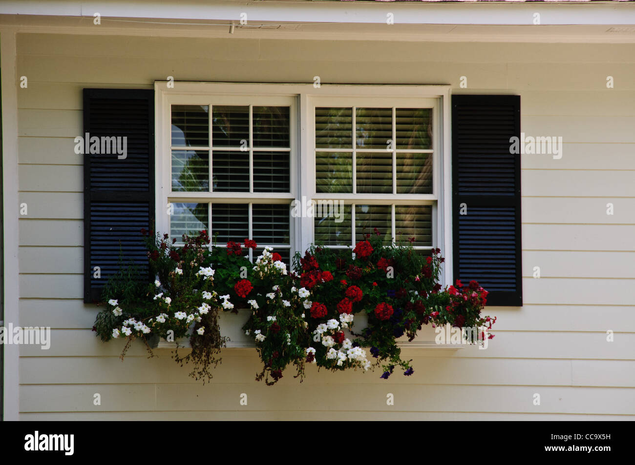 Colorful Window Box, W. Bluff Drive, Savannah, Georgia - Stock Image