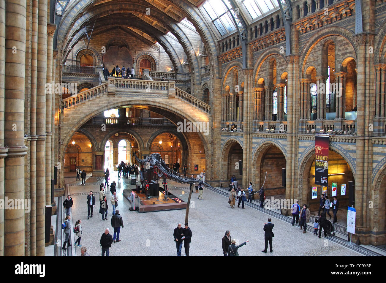 Dinosaur skeleton in Central Hall at Natural History Museum, Cromwell Road, Kensington, Greater London, England, - Stock Image