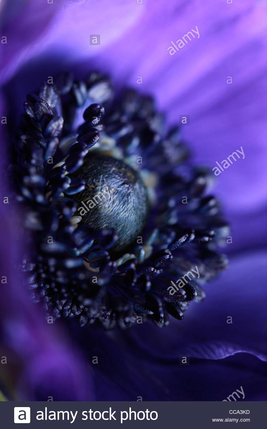 Flower - Stock Image