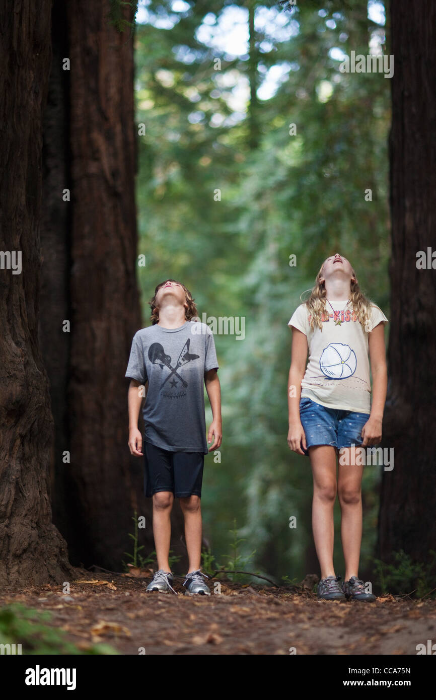 Two children looking up at a tree in awe - Stock Image