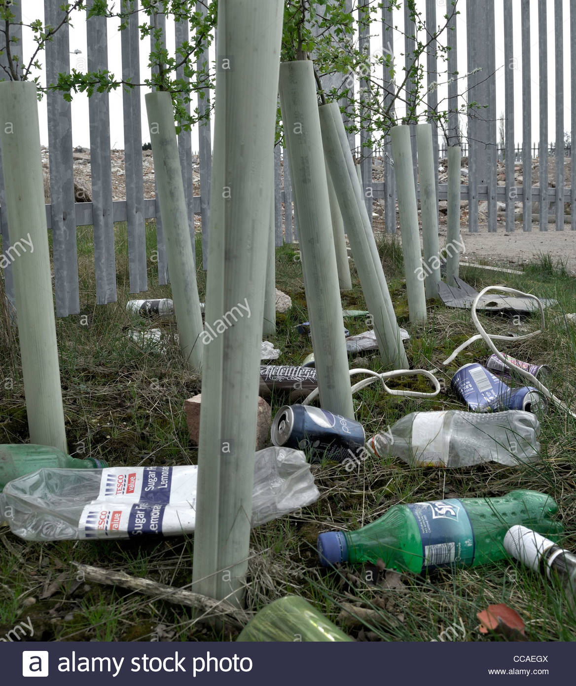 Litter strewn among newly planted saplings by side of road. Photographed in Rugely, Staffordshire, UK - Stock Image
