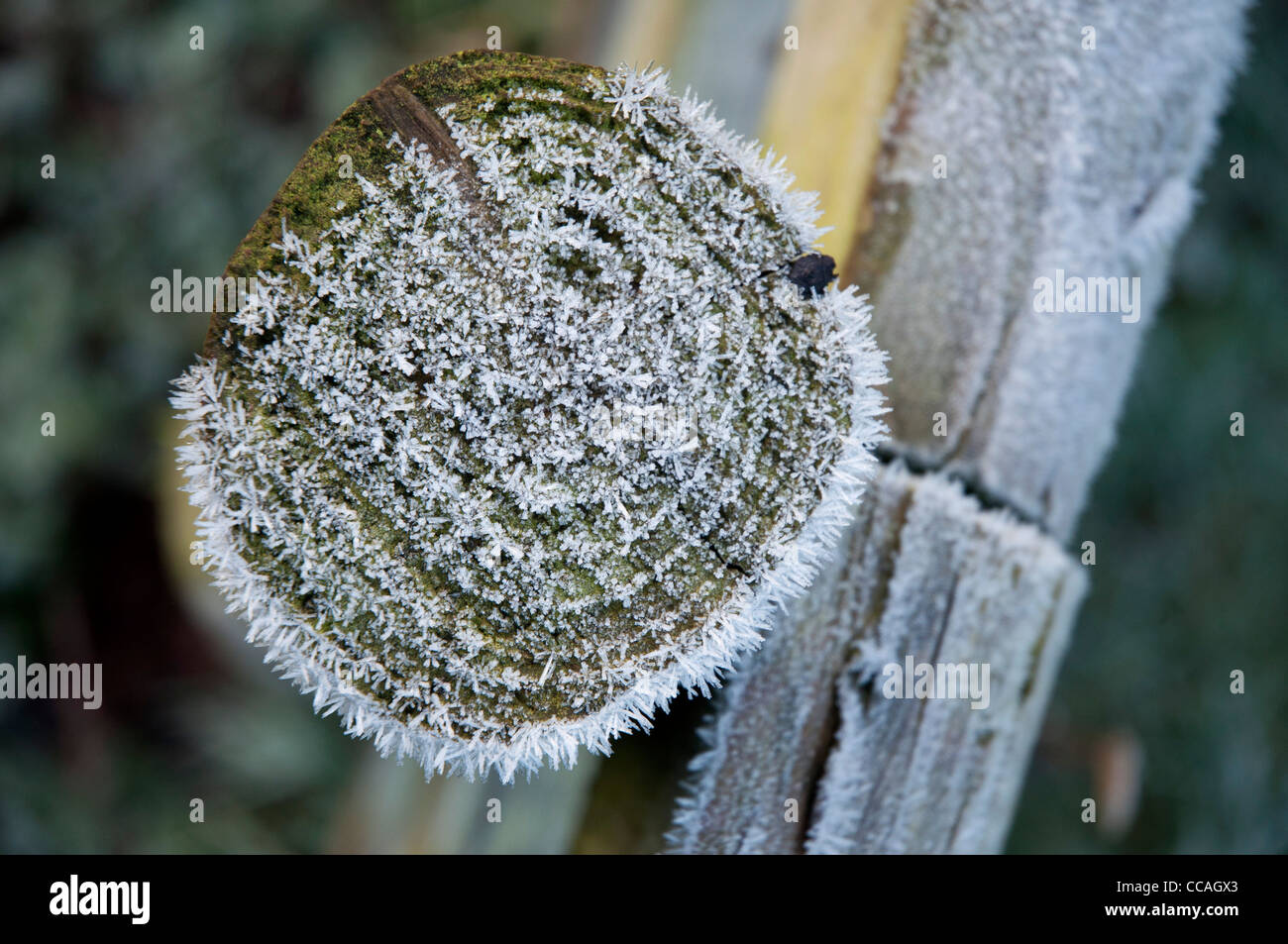 frost on wooden fencing post and rail in close up - Stock Image
