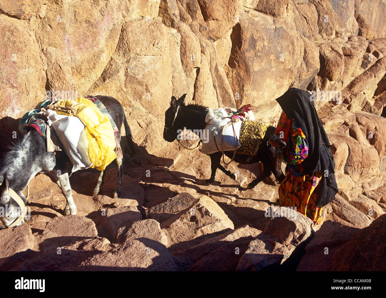 Beduin Woman With Donkey Mount Sinai Egypt, - Stock Image
