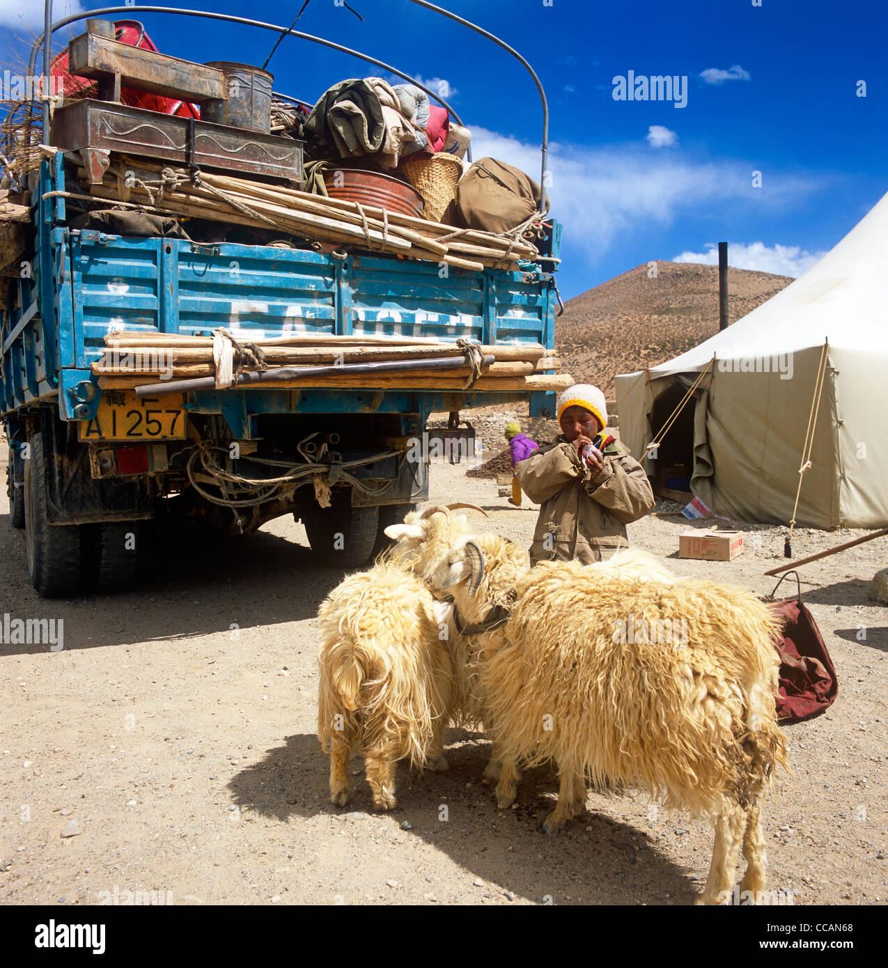 Tibetan Boy With Sheep Western Tibet - Stock Image