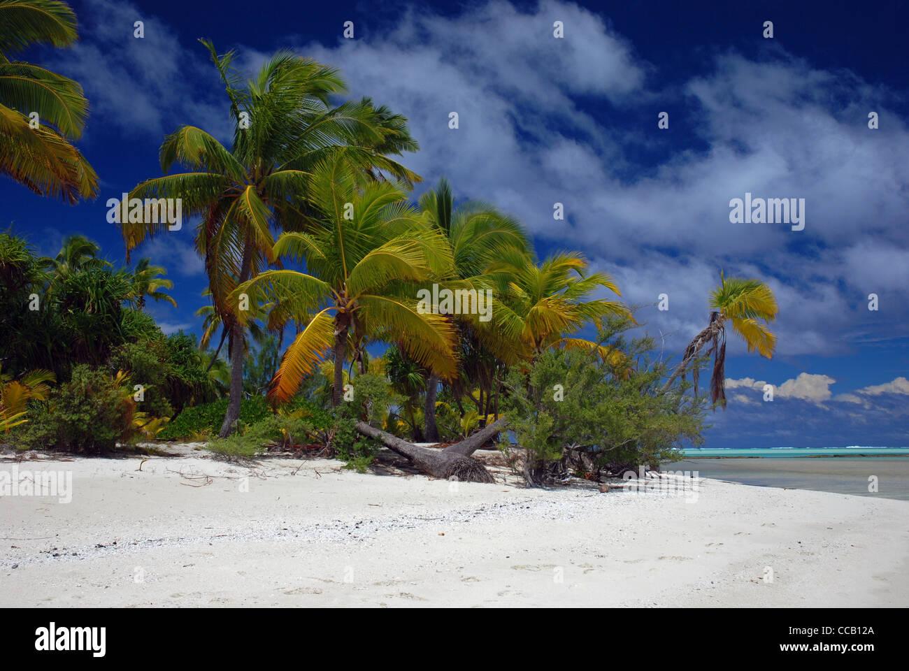 Coconut palms trees and white sand beach and blue sky, Tapuaetai island (one foot island), Aitutaki atoll, Cook - Stock Image