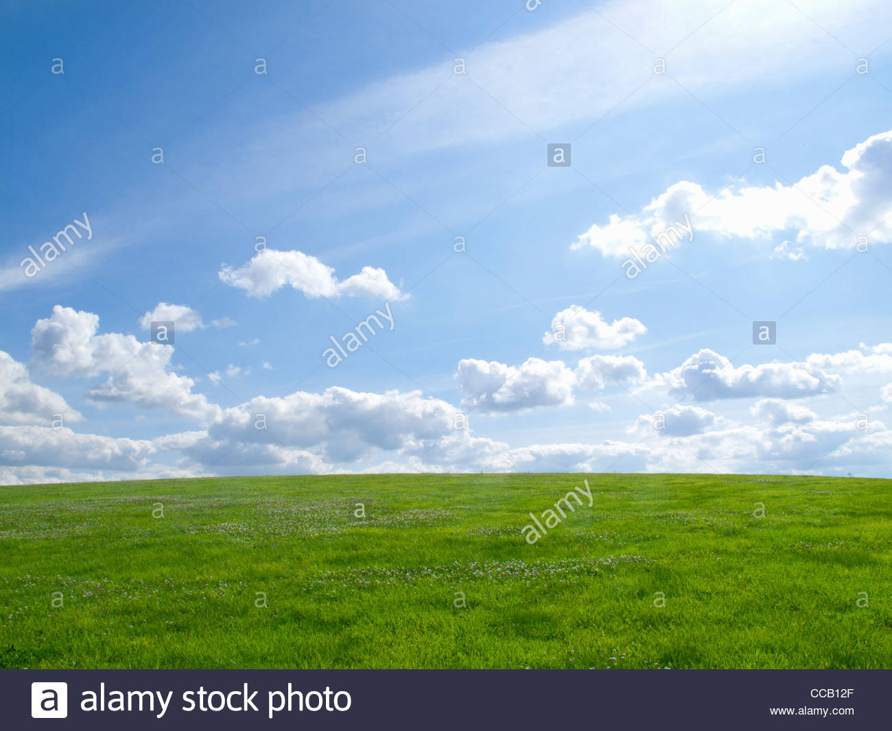 Green grass under sunny blue sky - Stock Image