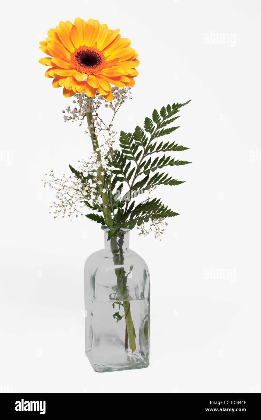 eine gelbe Gerbera steht in einer Glasvase | a yellow Gerbera upright in a vase - Stock Image