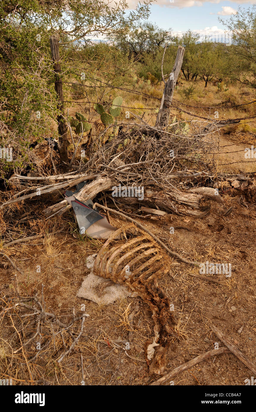 Animal parts are left at an illegal dumping site in Sahuarita, Arizona, USA, in the Sonoran Desert. - Stock Image