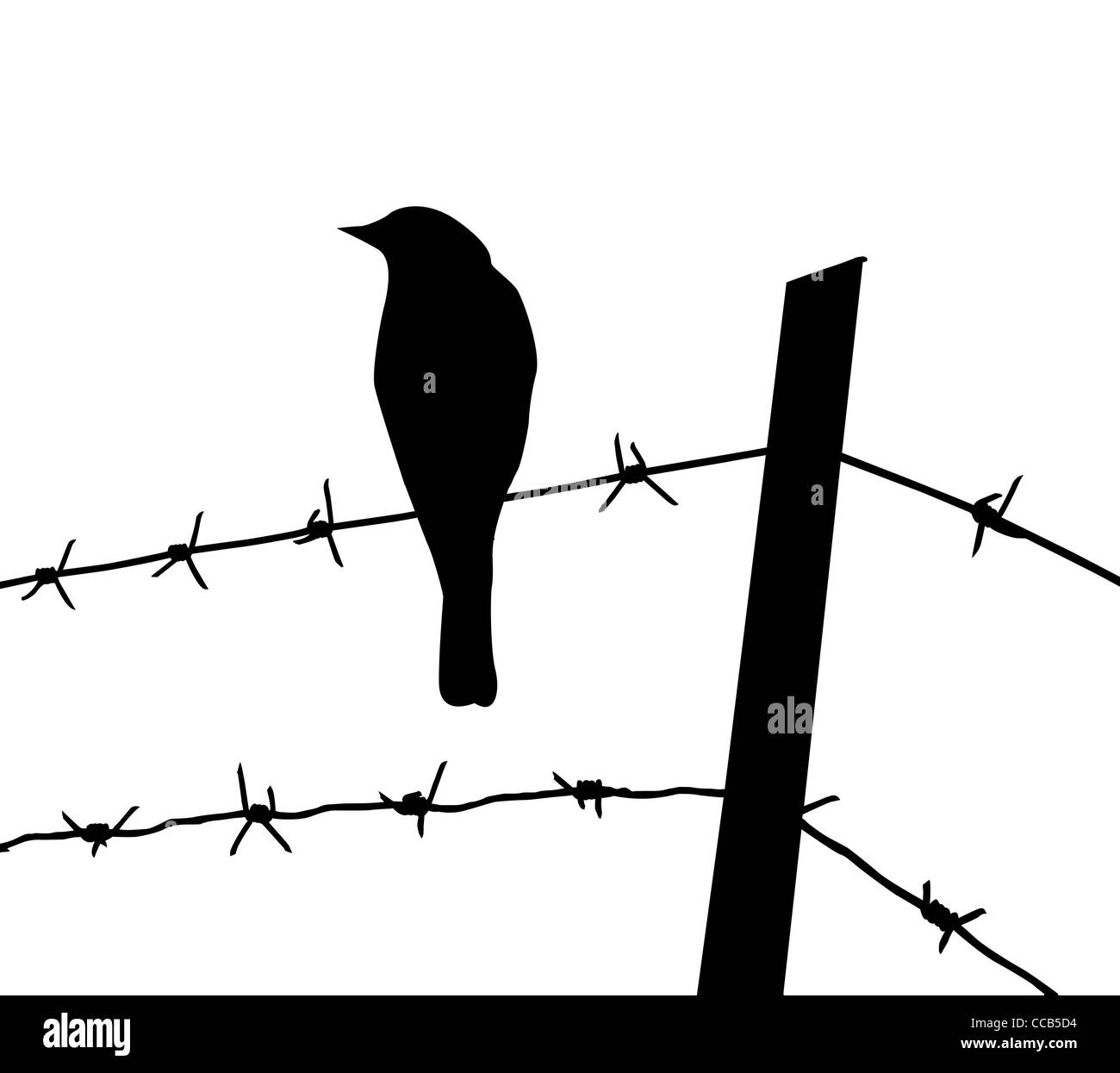 Barbed Wire Tattoo Cut Out Stock Images Pictures Alamy