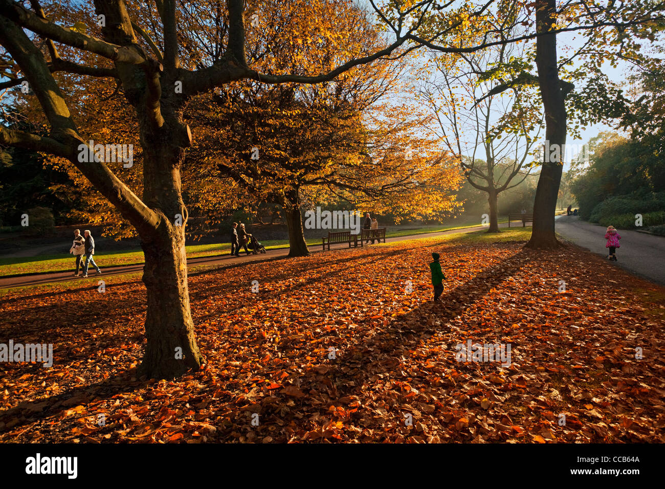 Autumn Colours, Royal Botanic Garden, Edinburgh - Stock Image