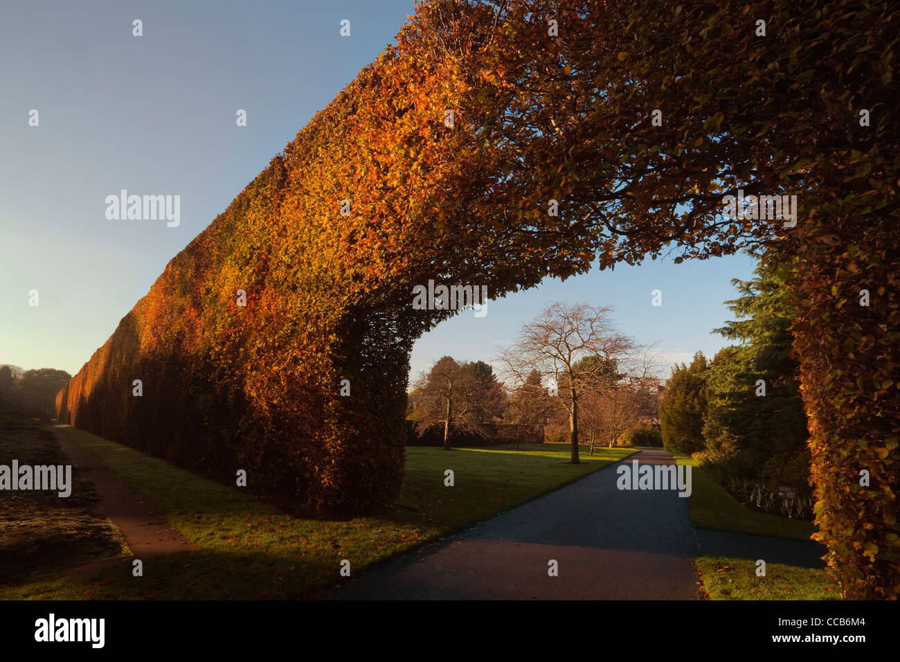Beech Hedge, Royal Botanic Garden, Edinburgh - Stock Image
