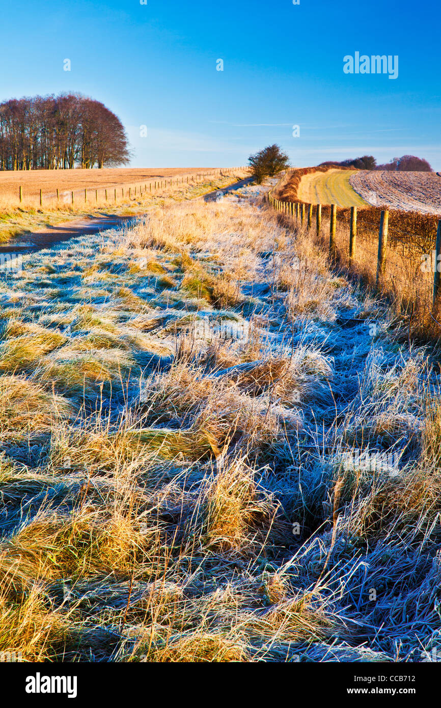 A frosty winter morning over the Ridgeway long distance path at Hackpen Hill, Wiltshire, England, UK Stock Photo