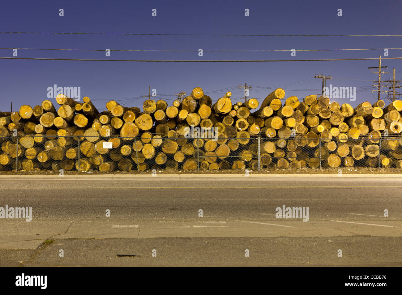 Stacked tree logs - Stock Image
