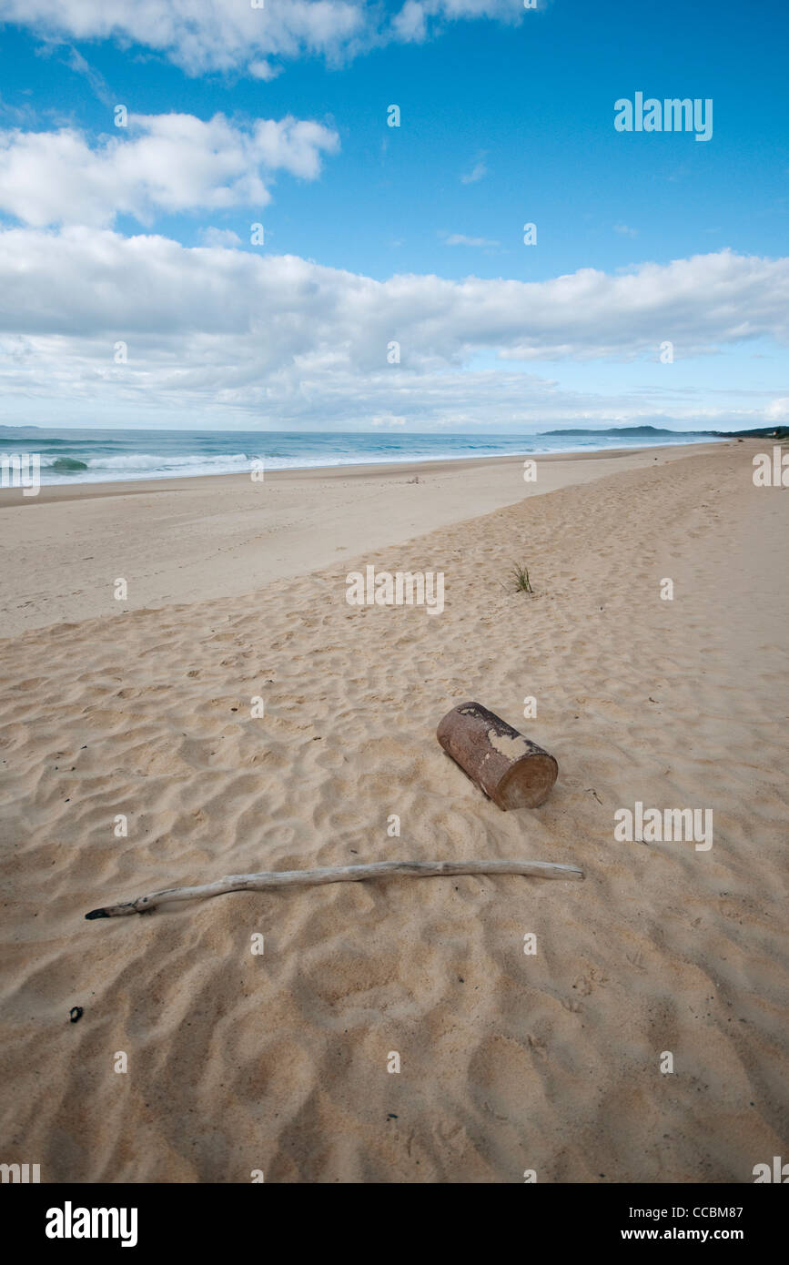Driftwood on beach - Stock Image