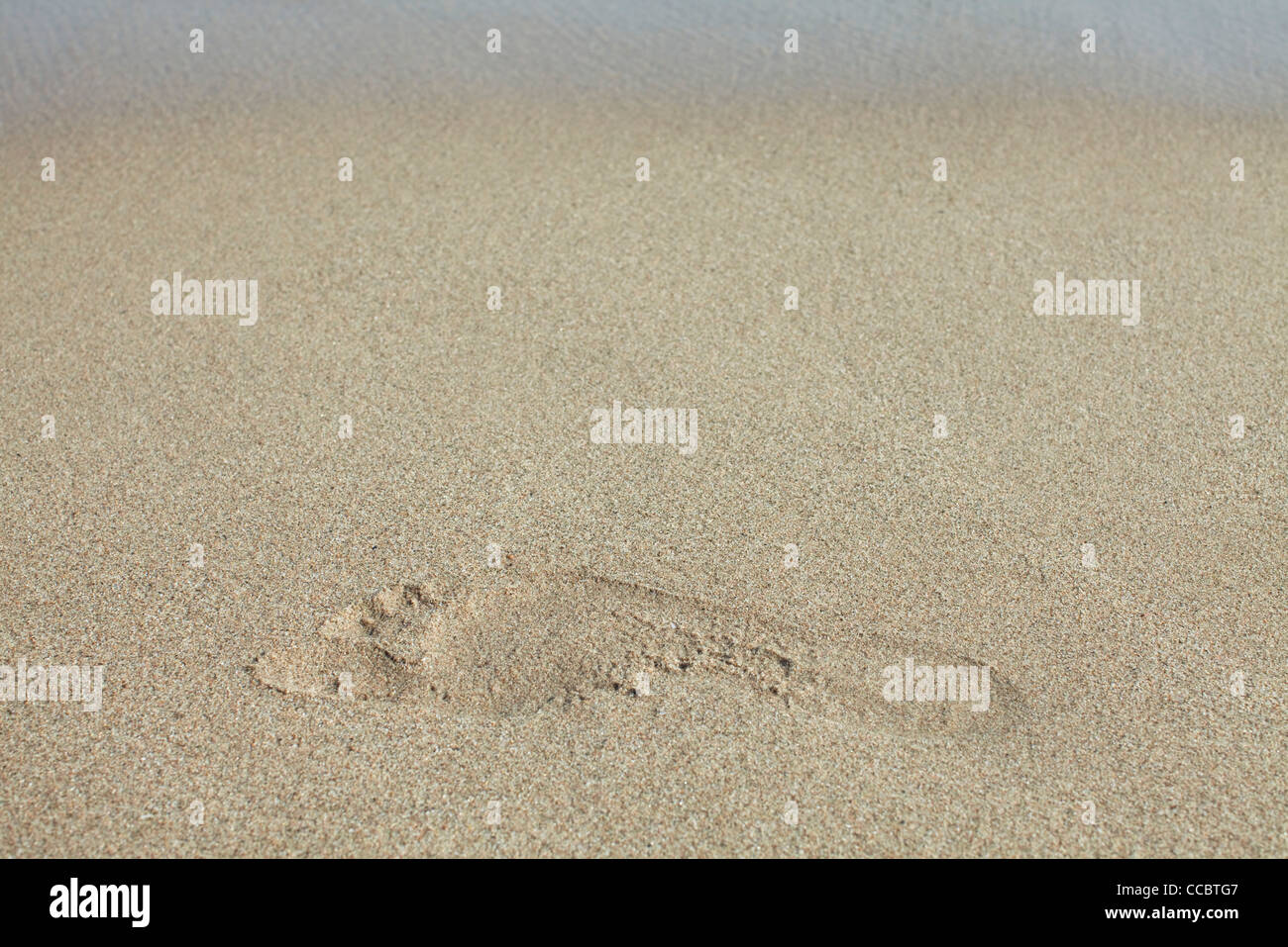 Footprint in sand - Stock Image