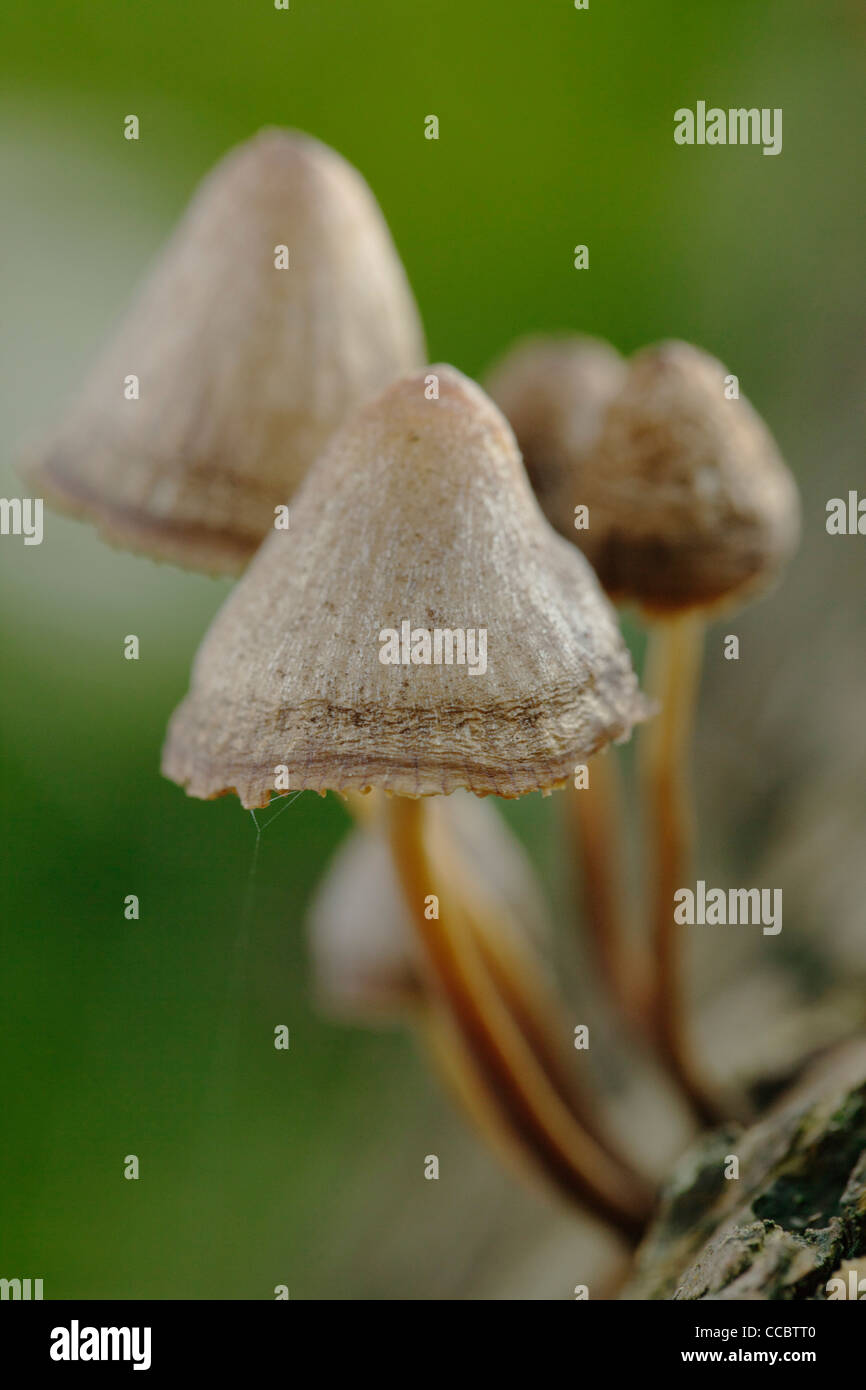 Mushrooms - Stock Image