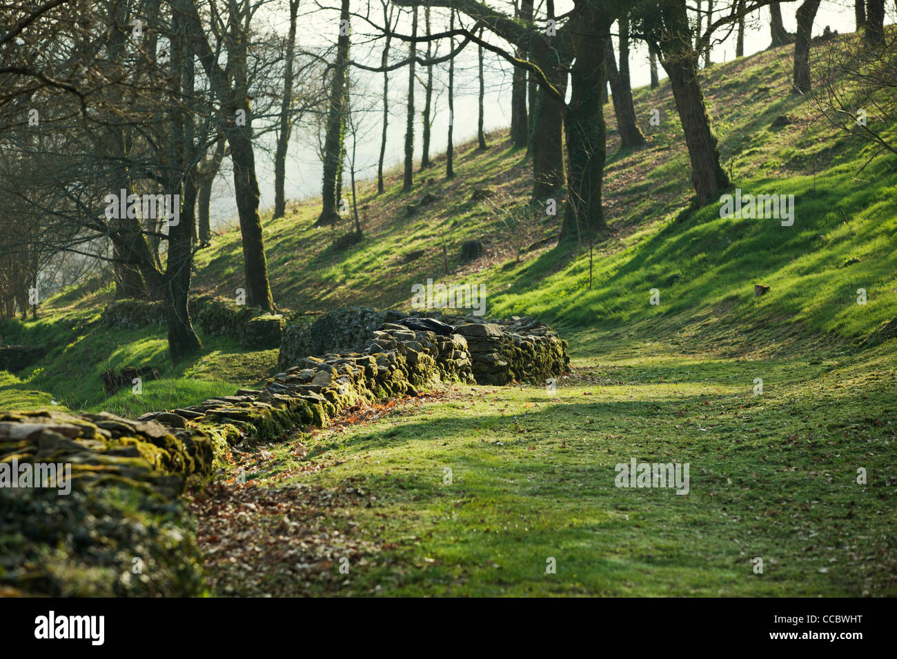 Old stone wall running through prairie, Poul-Fetan, Brittany, France - Stock Image