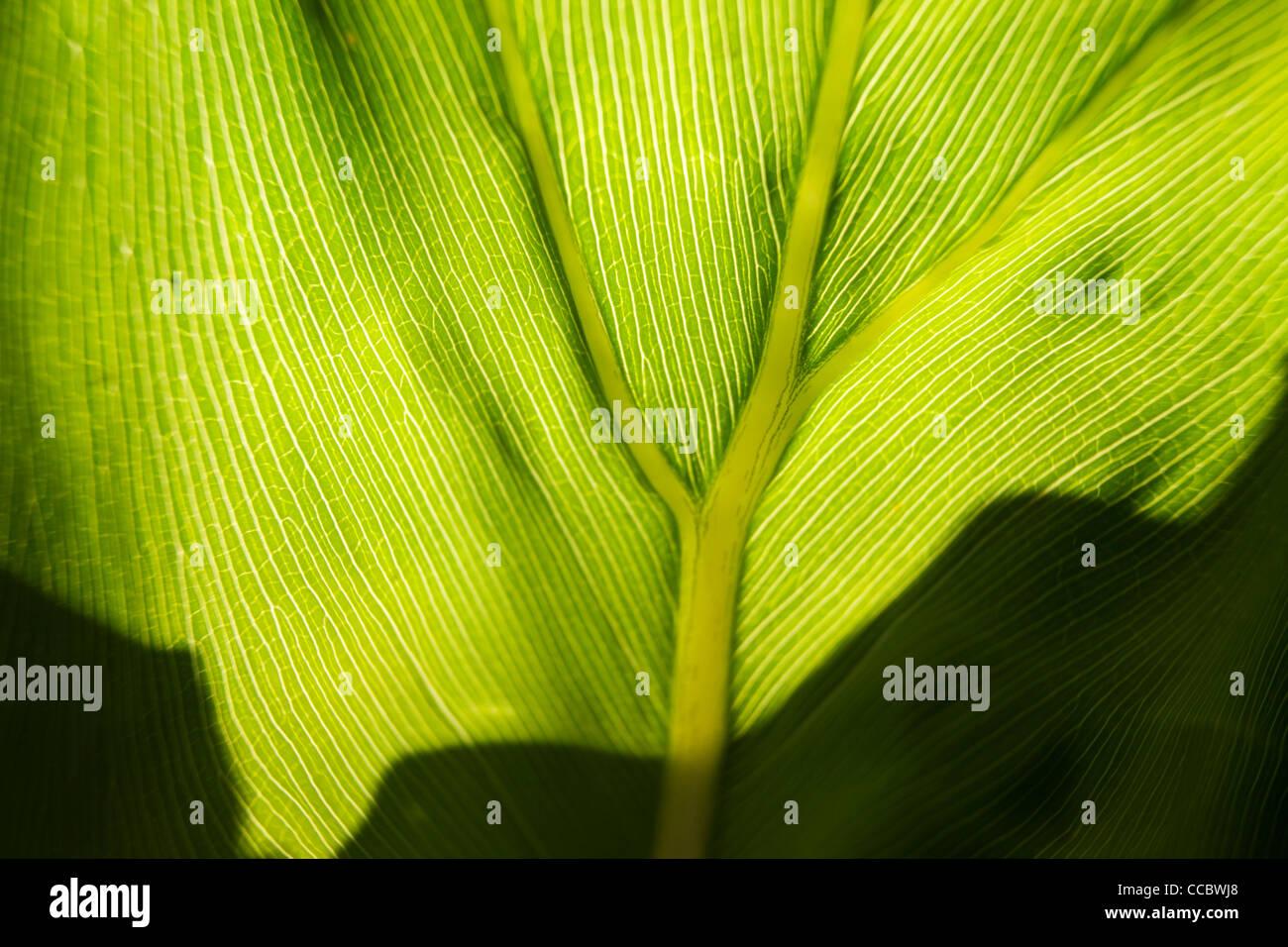 Leaf, close-up - Stock Image