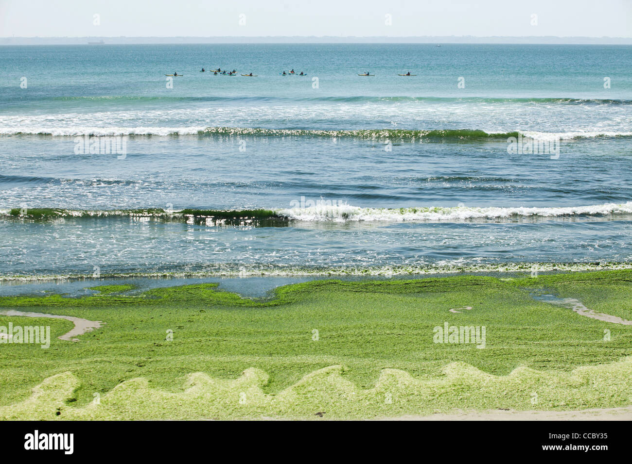 Toxic algae washed up on beach, Plage de Postolonnec, Crozon Peninsula, FinistÅre, Brittany, France - Stock Image