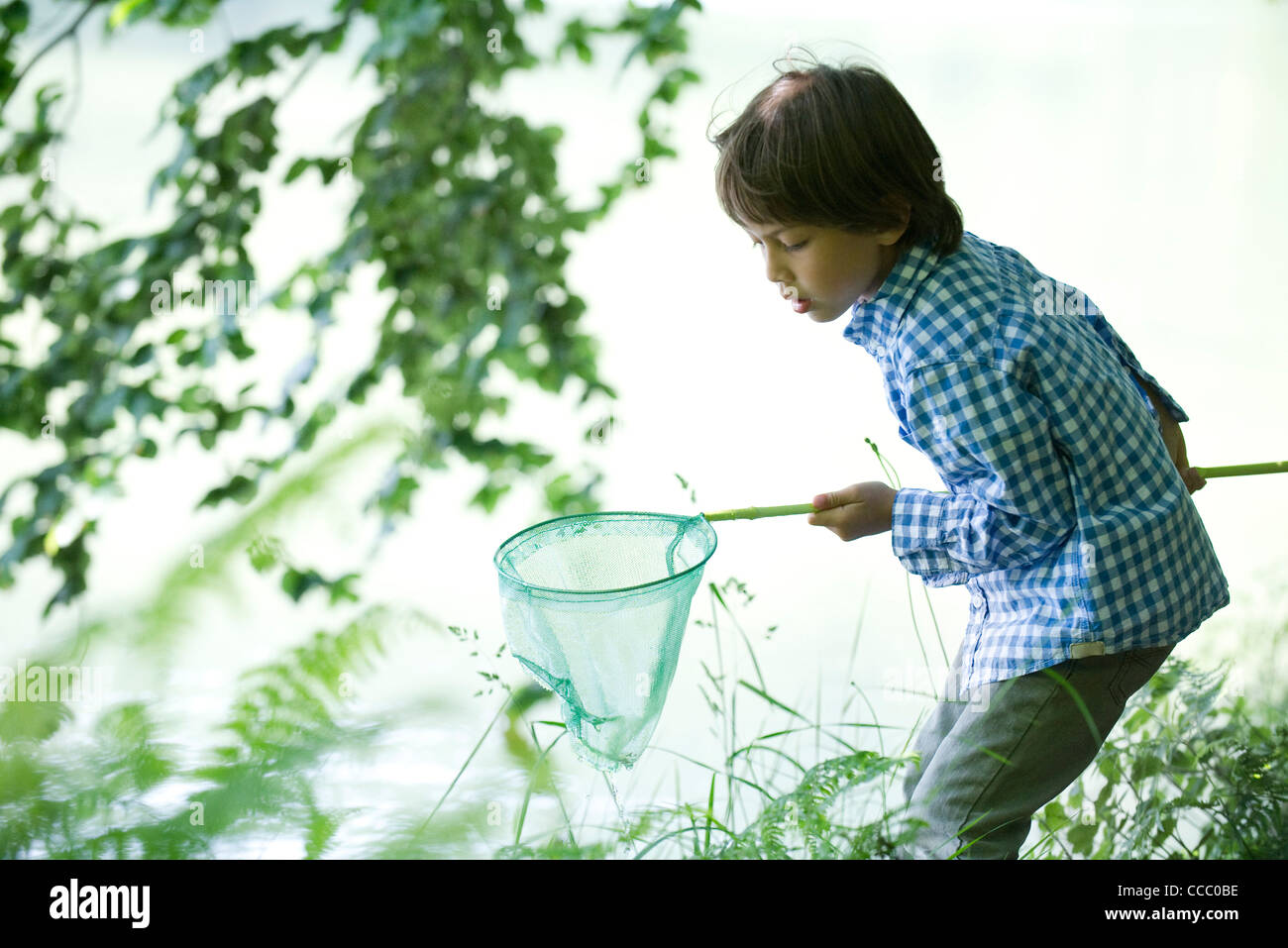 Boy catching tadpoles at water's edge - Stock Image