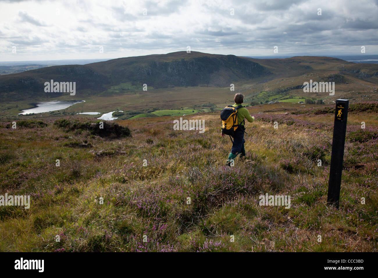 Walker on the Ox Mountain Trail above Glendaduff, County Mayo, Ireland. - Stock Image