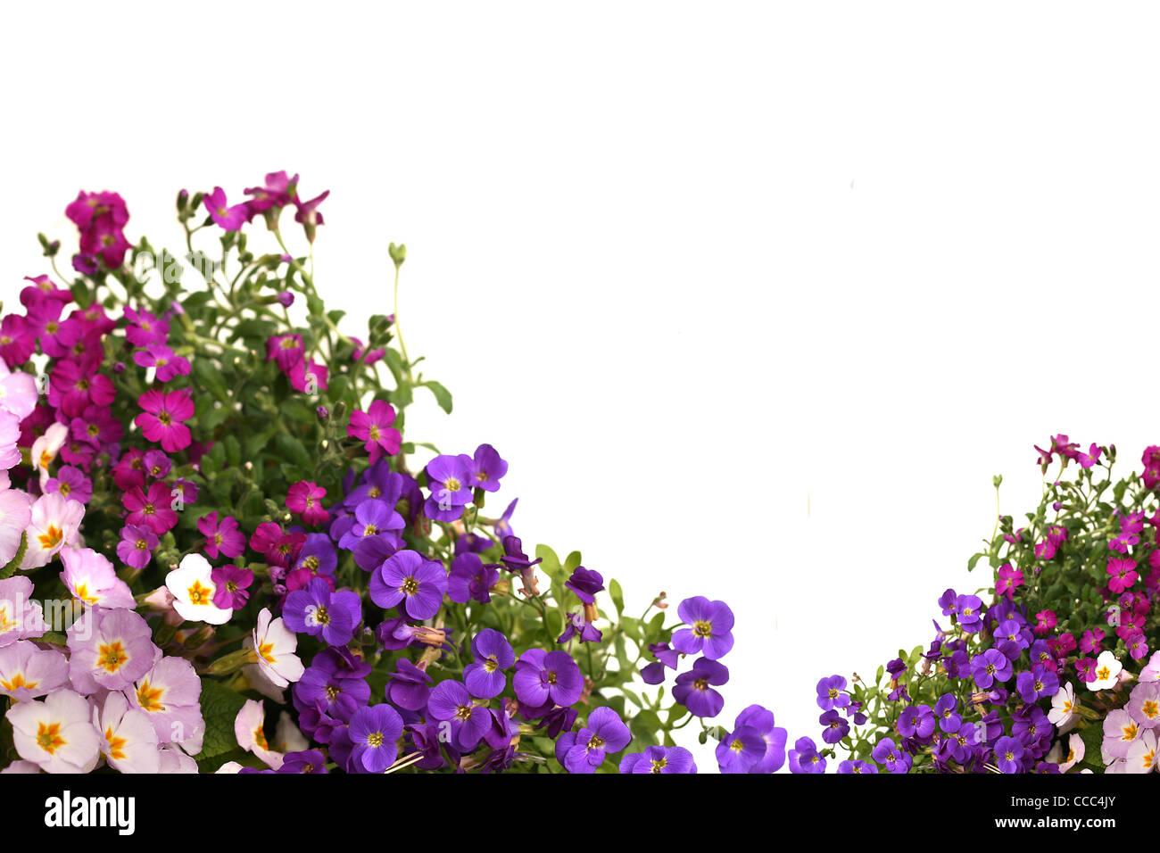 Spring flowers border stock photo 42063699 alamy spring flowers border mightylinksfo